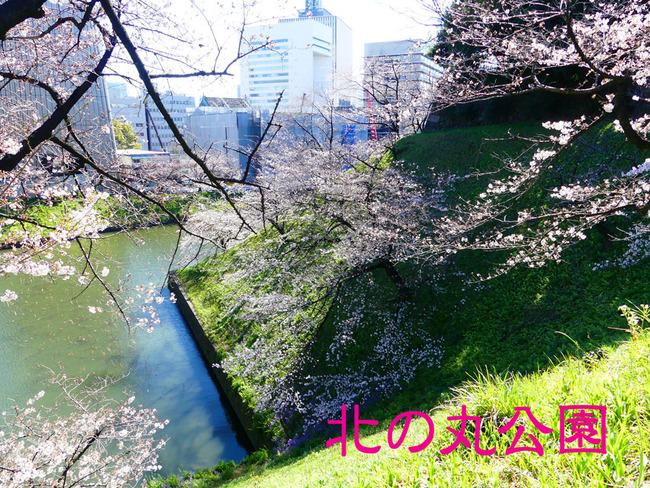 P4500384_edited-1