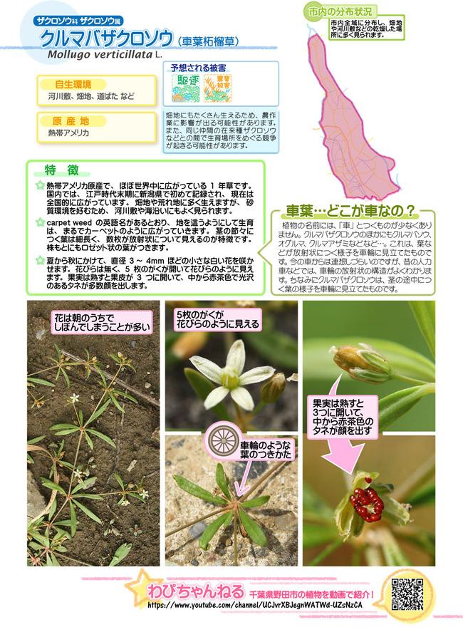 plantcard_1808-4_C