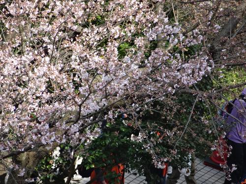 アイスタ桜