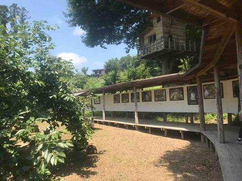 山に打ち上げられた蔡國強の船、そして9万9千本の桜を植える人