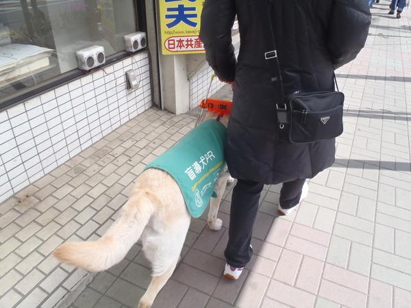 盲導犬ウォーク001