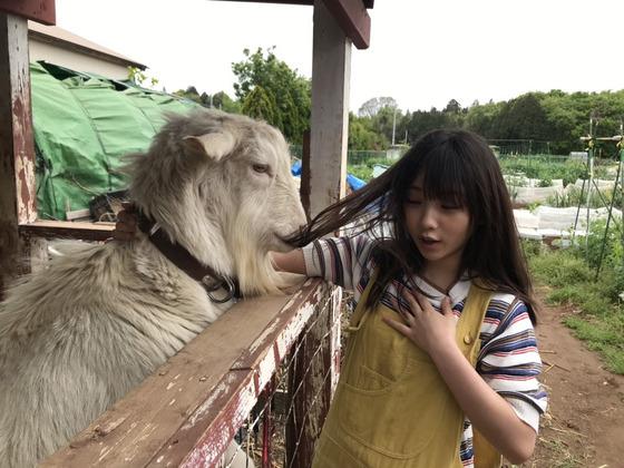 【画像】女子さん、大事な毛をヤギに食べられる・・・・・