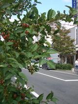 西後町82ビル前赤いリンゴ