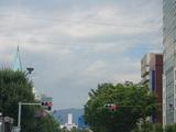 長野大通り沿いの木々