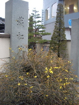 栽松院前の花