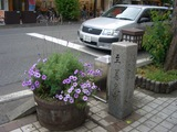 鉢の紫花寄せ植え