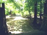 昌禅寺の木々