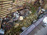 理容院横の金魚