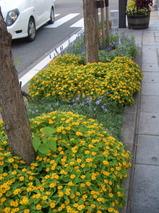 大門交差点の花々