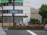 長野大通り沿いの花