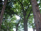 善光寺境内の木々2