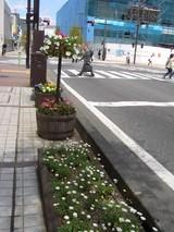 昭和通り辺花プランター