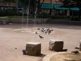 南千歳公園噴水と鳩