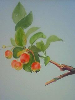 水彩画家・長尾周二・作品写真「姫りんご」