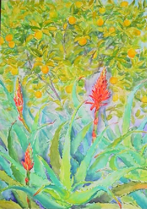 水彩画家・長尾周二・作品「アロエの花」写真