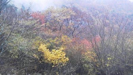 水彩画家・長尾周二141028