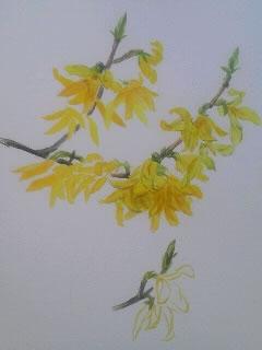 水彩画家・長尾周二・作品写真・ロワールの花の絵1