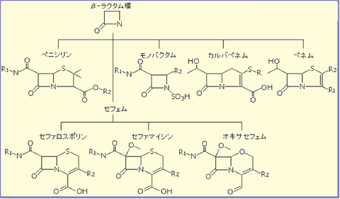 β-lactam[1]