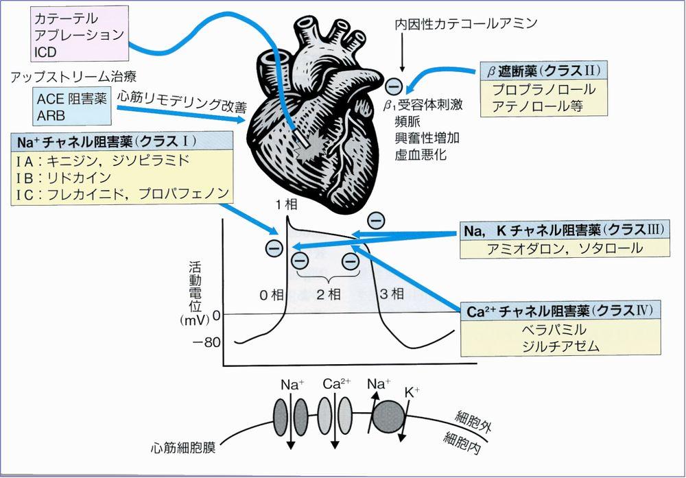 各論 心血管内分泌 - 長崎大学