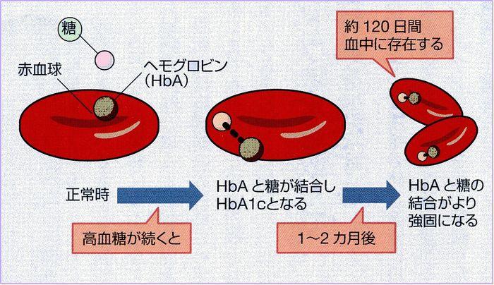 糖化 ヘモグロビン