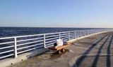 検見川浜4