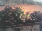 seeds & apple berries