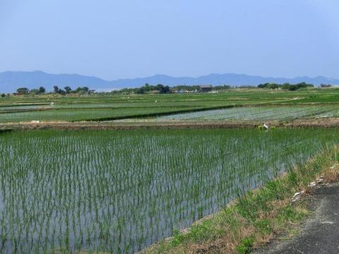 画家・柳樂晃里190604安来の田園風景1