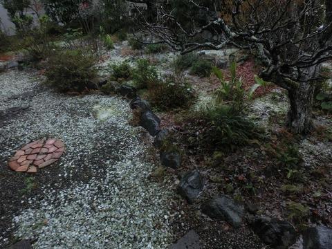 日本画家・柳樂晃里181209初雪1