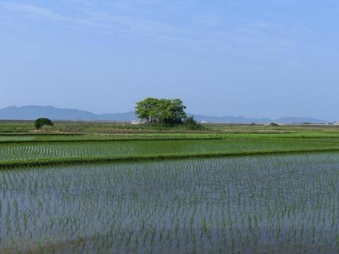 画家・柳樂晃里190604安来の田園風景3