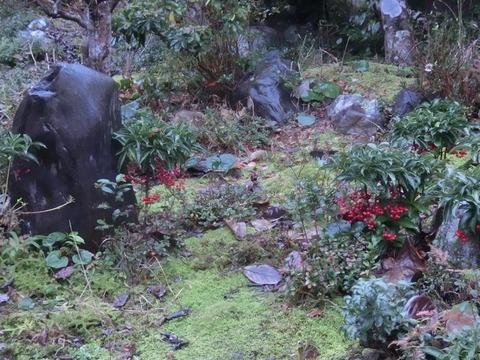 日本画家・柳樂晃里181216庭仕事2