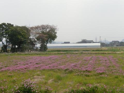 日本画家・柳樂晃里1904071レンゲ畑