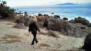 松林遊歩道の海岸