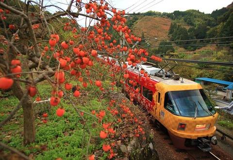 秋の実り tanakatakasi