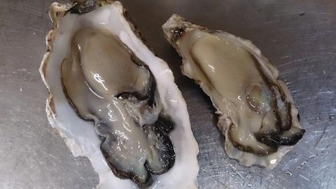 牡蠣比べ3