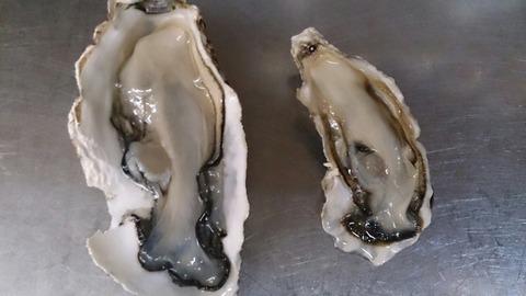 牡蠣比べ2