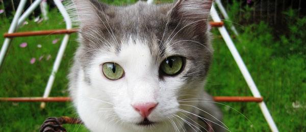 【再掲】ウサギのヌイグルミにヒゲが無かったから、抜けた猫のヒゲを見つけたら植毛してたんだ。んで、久しぶりにヒゲ見つけたから植毛しようとしたら・・・