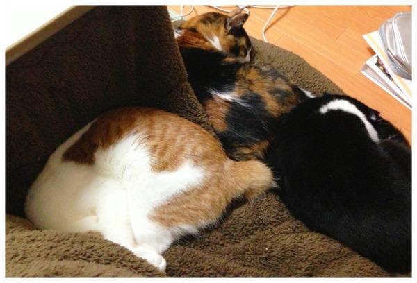 【画像】 なぜ三匹揃って、コタツの外で寝るのかな?