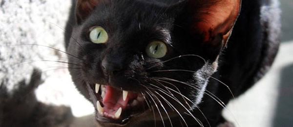 黒猫の温厚なのに出会ったことがない。  最初の子は子供の頃だったのでよく覚えてないけど、とにかく凶暴だった。