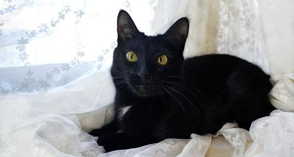 二匹の黒猫が順調に育ってるのだが名前がジジしか思いつかない。