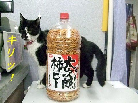 ビールのつまみの柿の種と猫 ・・・柿の種でかくね?