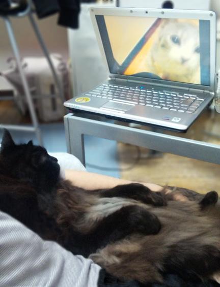 一緒に猫動画をいろいろ見てわかったけど自分と同じ黒猫には・・・