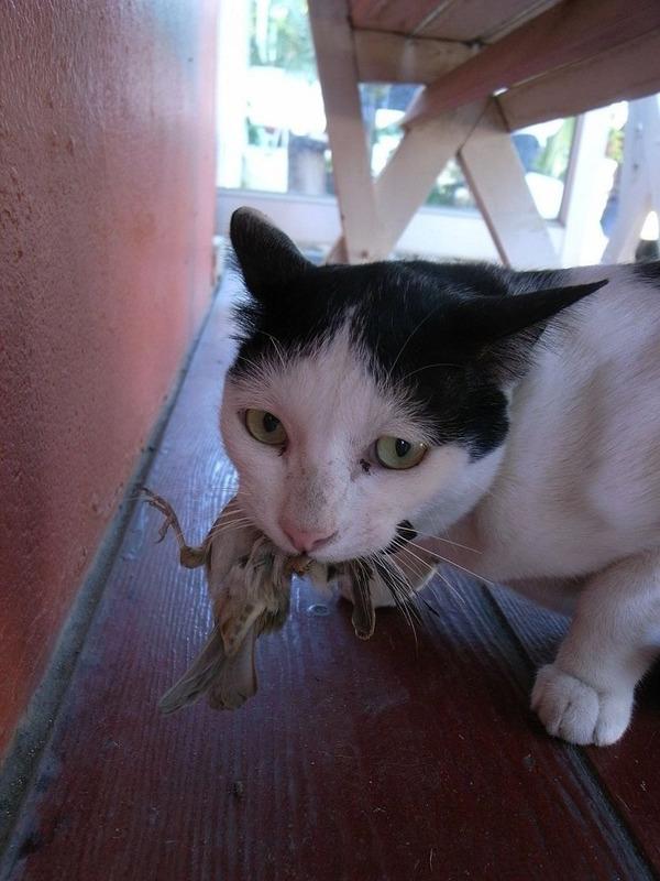猫「すずめゲット」