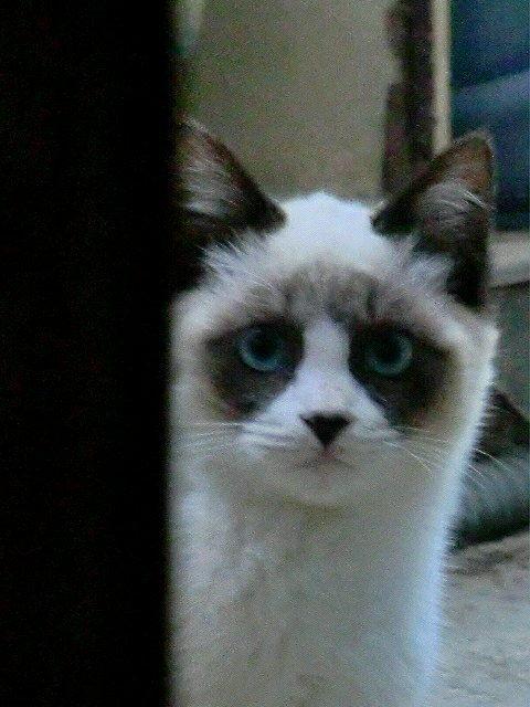 【どう見ても猫以外のものに見える】実家の近所に住み着いているノラ子。  模様がステキ過ぎて吹いた。