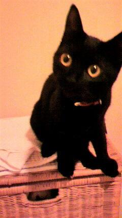 夜は黒猫を撮っても目しか写らない しかし、○○みたいだなぁ。