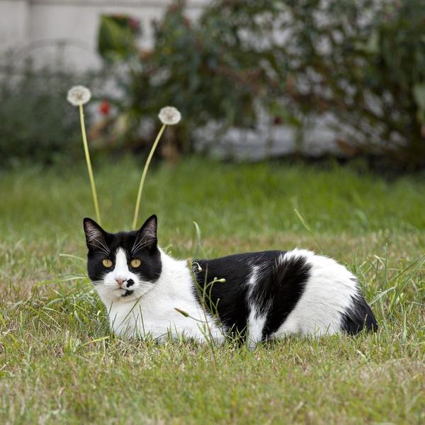 【画像】 猫型宇宙人