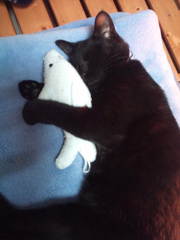 ムッハー!可愛い黒猫の寝姿撮ったぞー!と思って  翌日同僚に見せたら・・・