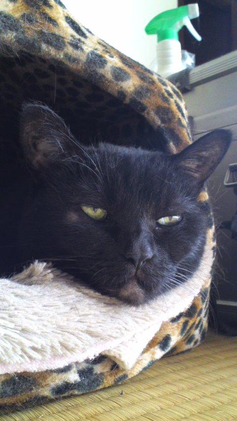 猫も夢見るの?静かに寝てるなぁって思ってたら、いきなり「フハーッ!」って威嚇する時のアレやってた。