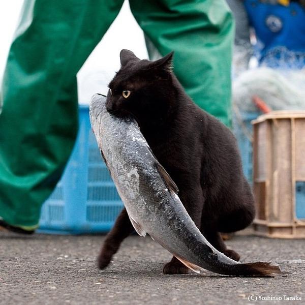 【画像】 泥ネコ