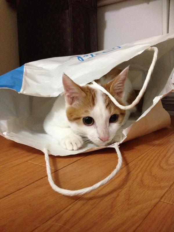 なんてこんなに箱と袋が好きにゃんだ・・