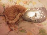【画像】 顔が寝姿と微妙にマッチしてるのがワロス